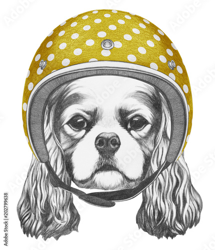 Obraz Portrait of Cavalier King Charles Spaniel with helmet,  hand-drawn illustration - fototapety do salonu