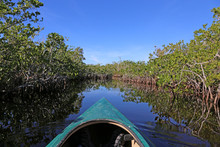 A Kayak Moving Through The Mangroves Of Everglades National Park, Florida Reflecting In A Waterway Of Hell's Bay Trail..