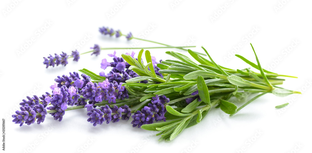 Fototapety, obrazy: Lavender bunch on a white