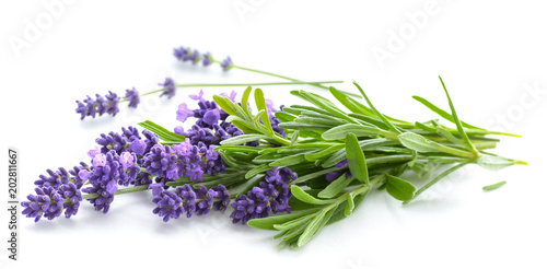 Poster Lavendel Lavender bunch on a white