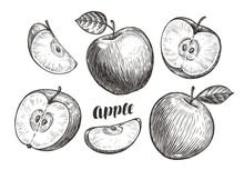 Hand-drawn Apples And Slices, ...