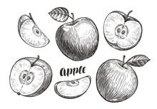 Hand-drawn Apples And Slices, Sketch. Fruit Concept. Vintage Vector Illustration