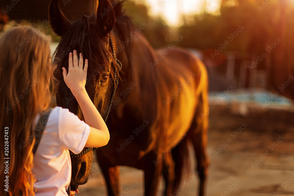 Fototapety, obrazy: Young blonde girl stroking a brown horse.