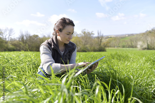 Fototapeta Agronomist in crop field using digital tablet obraz