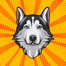 Siberian Husky Head. Dog Portr...