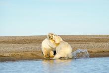 アラスカのホッキョク...