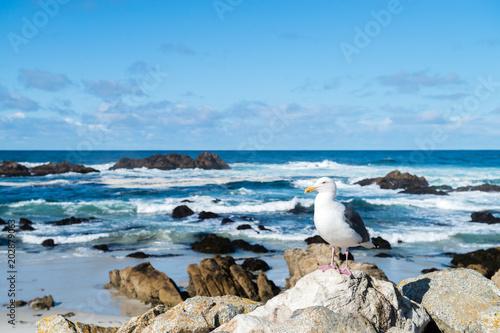 海岸の波とカモメ