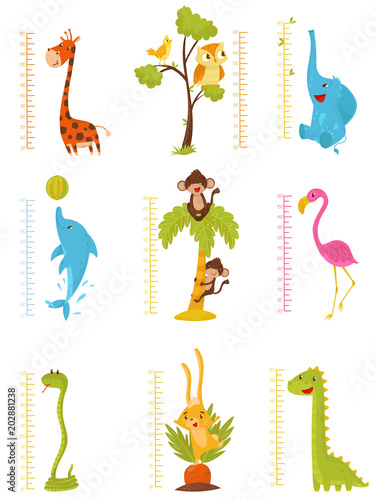 Fotografía  Flat vector set of rulers for measuring kids growth with cute animals and birds