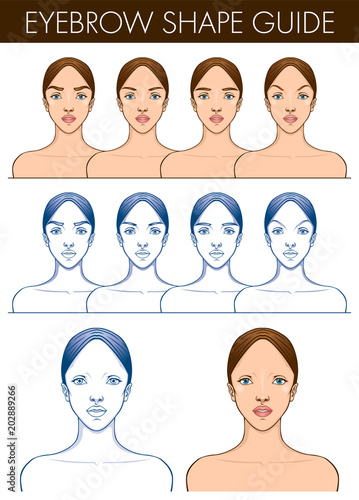 Eyebrow Shape Guide Template Of Female Blank Face Vector