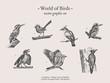 Small birds vector drawings set