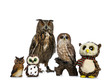 Row / collection of owls; stuffed animals, ceramic and Turkmenian Eagle owl / bubo bubo turcomanus sitting isolated on white background looking straight in lens