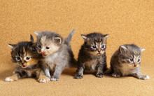 Newborn Kitten. Day 20 Of Life.