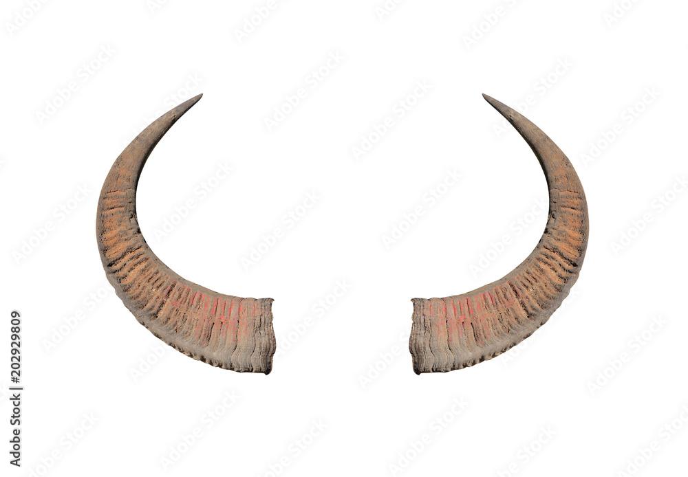 Fototapeta Buffalo horns on white background texture