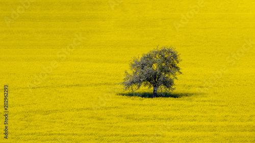 Blooming tree on golden ground - Blühender Baum auf goldenem Boden Wallpaper Mural