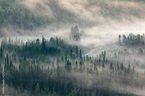 Canvas Prints Morning with fog Above the trees