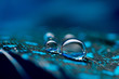 A abstract image of blue color fluffy feathers with two macro water dew drop, beautiful natural background.