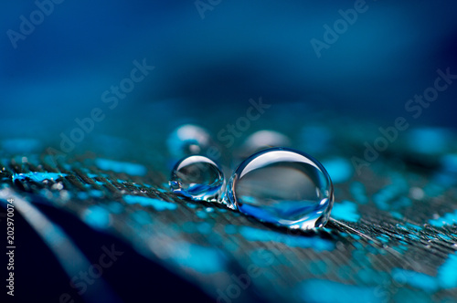 Stickers pour portes Macro photographie A abstract image of blue color fluffy feathers with two macro water dew drop, beautiful natural background.