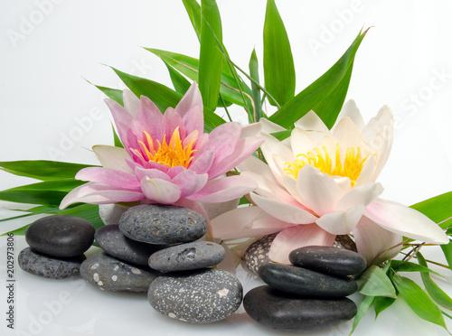 Keuken foto achterwand Waterlelies Auszeit, Entspannung, Schönheit, Meditation: Seerosen auf Seerosenblatt vor weißem Hintergrund mit schwarzen Kieselsteinen und Bambus :)