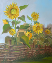 "Picture ""Sunflowers Behind A W..."