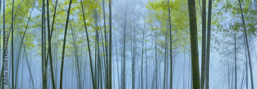 Foto op Canvas Bamboo Bamboo forest in mist