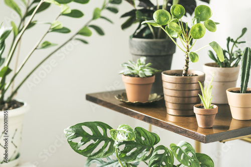 Fotomural Close up of stylish interior with a lot of plants in different red clay pots