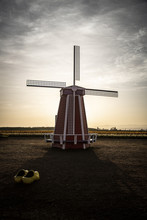 Sunrise View Of Old Red And White Wooden Windmill And Large Yellow Wooden Shoes With Tulip Farm Field In Background