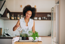 Beautiful Mixed Race Woman Gardening Fresh Herbs At Her Kitchen.