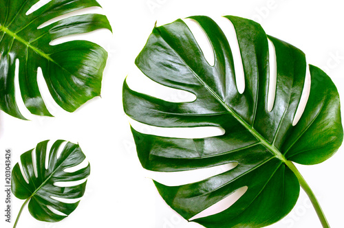 Leaf of monsters on a white background