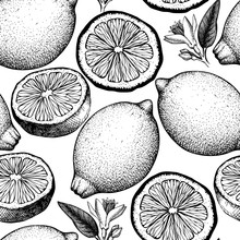 Vector Seamless Pattern With Ink Hand Drawn Citrus Fruit, Flowers, Slice And Leaves Sketch. Vintage Background With Lemon Plants.