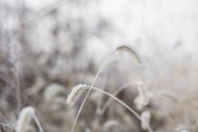 추위를 이겨내는 버들강아지