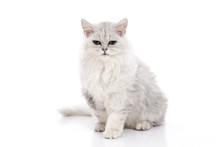 Tabby Cat Lying And Looking On White Background