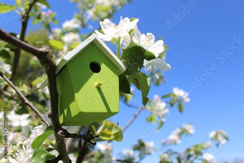 Vogelhaus im Apfelbaum Fototapete