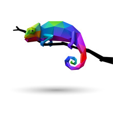 Colorful Chameleon, Logo Conce...