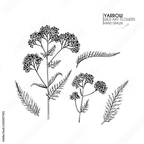 Hand drawn wild hay flowers Canvas Print