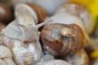 tło ze ślimakami i muszlami