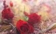 tło z motywem czerwonej róży i uschniętej trawy
