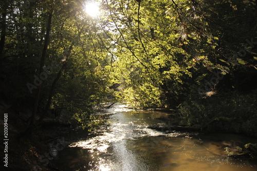 Spoed Foto op Canvas Weg in bos Rzeka