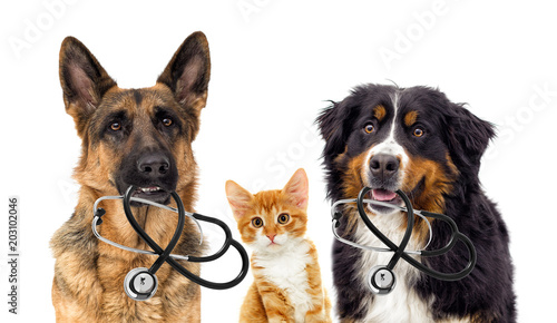 Chat dog veterinarian and cat