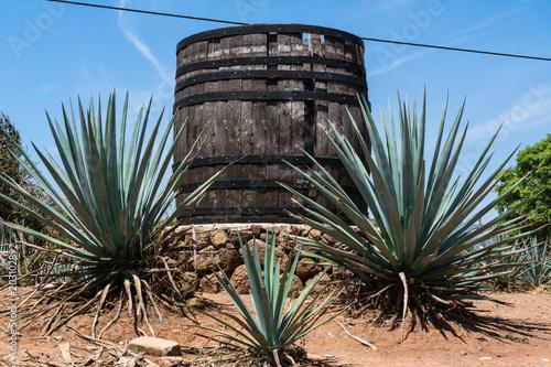 Barril grande y plantas de agave azul en la ruta del tequila.