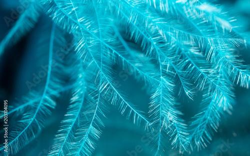 Niebieskie pióro jako abstrakcyjne tło