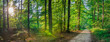 Forest panorama in summer, idyllic pathway with sunrays shines through trees in park