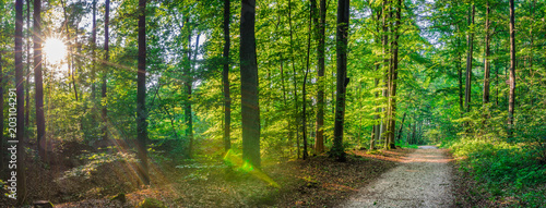 Tuinposter Weg in bos Forest panorama in summer, idyllic pathway with sunrays shines through trees in park