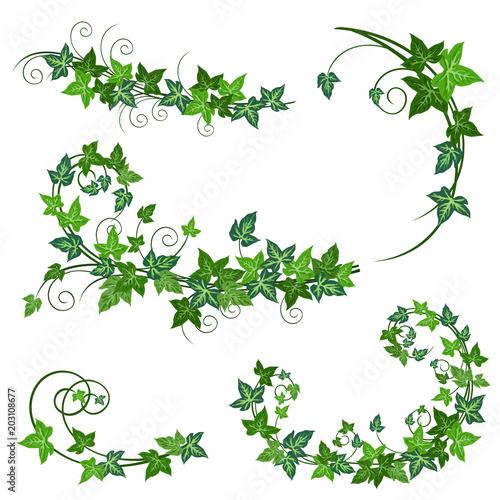 Ivy vines Fotobehang