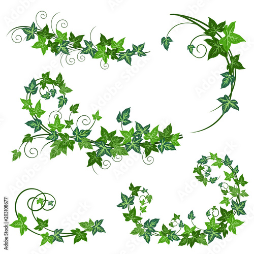 Canvas Print Ivy vines