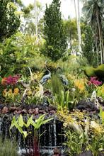 Beautiful Singapore Botanic Ga...