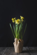 Close-up Of Yellow Flowers On Wooden Table Against Black Background