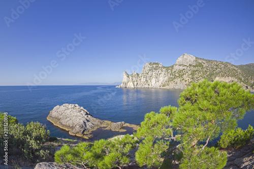 Fotobehang Lavendel Relict pine on a rocky seashore.