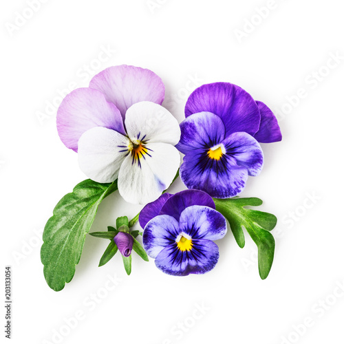 Wall Murals Pansies Pansy flowers