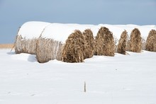 Round Bales In Snow