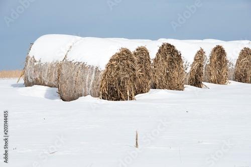 Photo  Round Bales in Snow